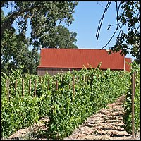 Barn and vineyard