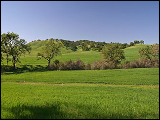 Oaks and Meadows, Chimney Rock Road